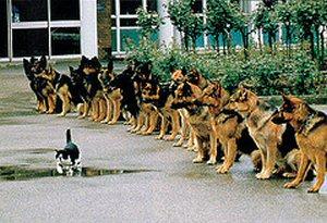 brave_cat1.jpg
