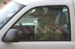 driving3.jpg