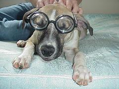 glasses11.jpg