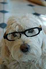 glasses23.jpg