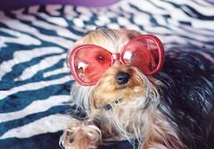 glasses25.jpg