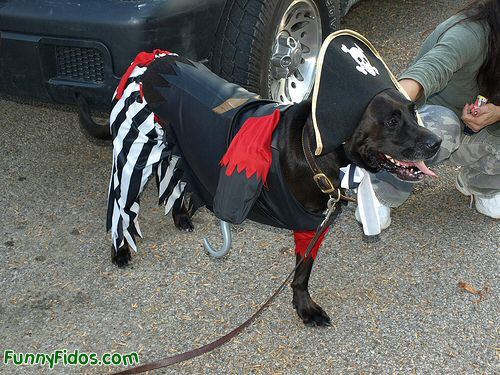 funny dogs dressed up. Posted in Dogs Dressed Up | No